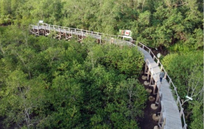 239 Ribu Warga NTT Dapat Akses Mengelola 604 Ribu Ha Hutan Negara