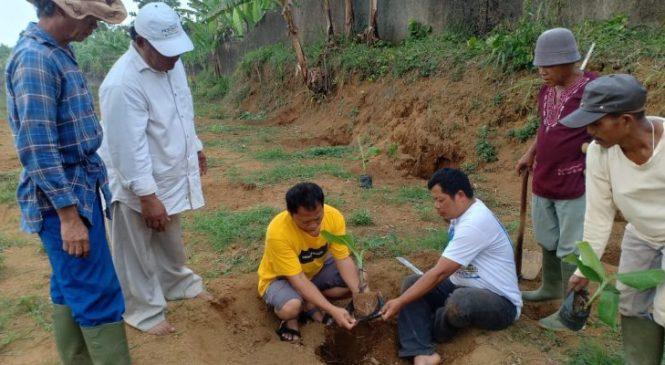 Kembangkan Pertanian Bogor, 3600 Bibit Pisang Ambon Ditanam HPPMI