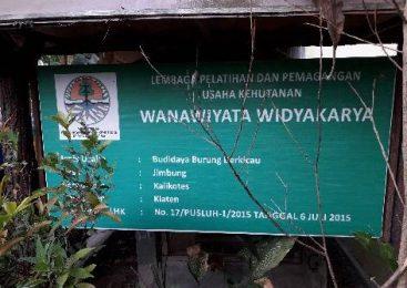 Peran Wanita Telaten Dibalik Sukses Penangkaran Burung di Klaten