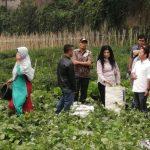 Himpunan Petani dan Peternak Milenial Indonesia Apresiasi Kinerja Ichsan Firdaus