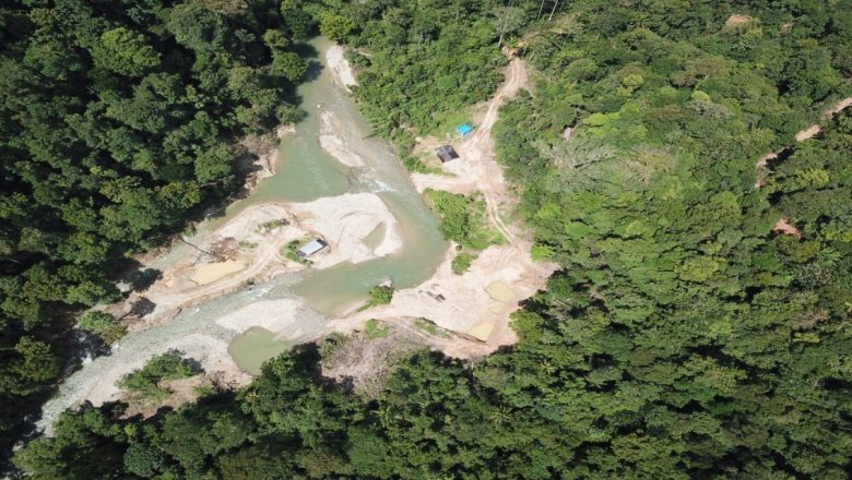 Penbang Emas Ilegal di Hutan Lindung Dimeja Hijaukan