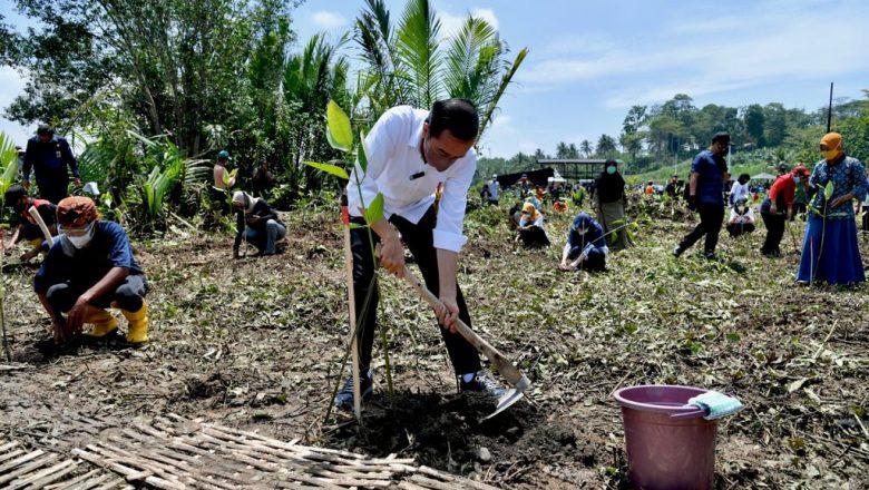 Di Cilacap, Presiden Tanam Mangrove untuk Pemulihan Lingkungan dan Mitigasi Iklim