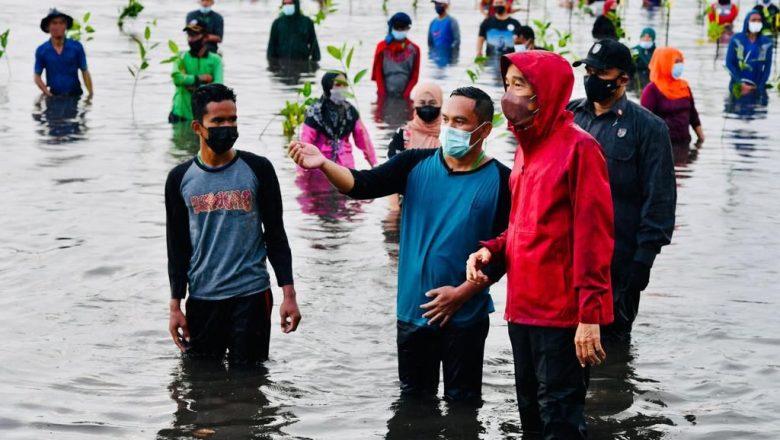 Turun ke Laut, Presiden Joko Widodo Tanam Mangrove Bersama Masyarakat di Batam